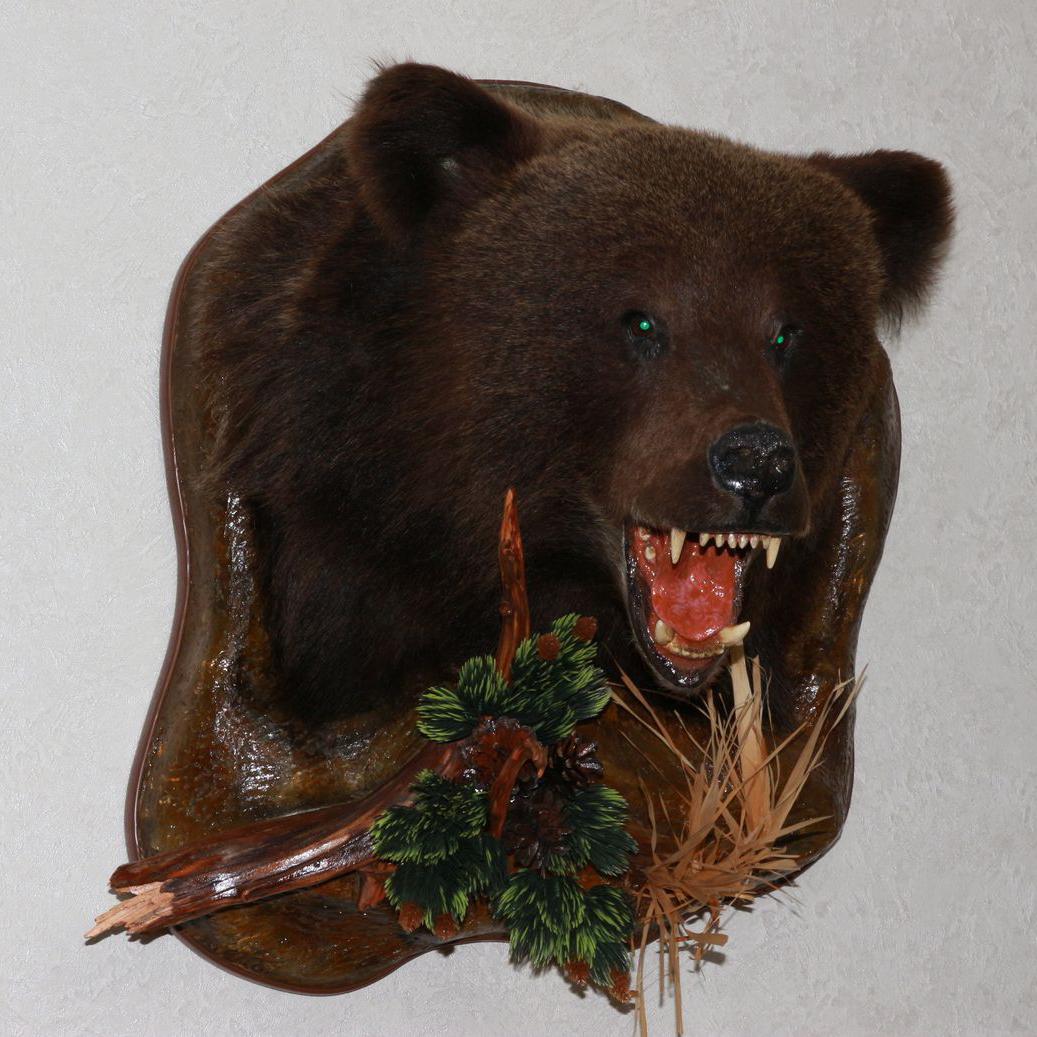 Siberian Brown Bear Taxidermy Head Shoulder Mount