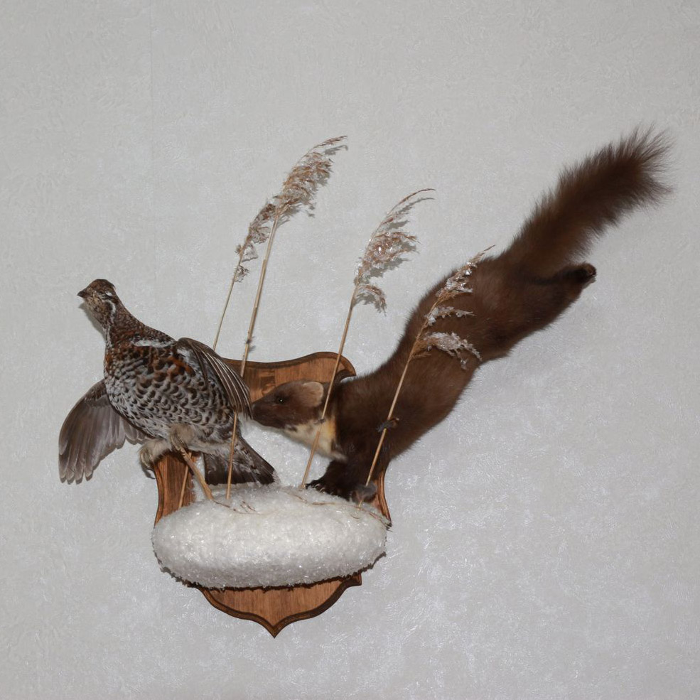 Pine Marten With Hazel Grouse Taxidermy Mount Fisher Mounted