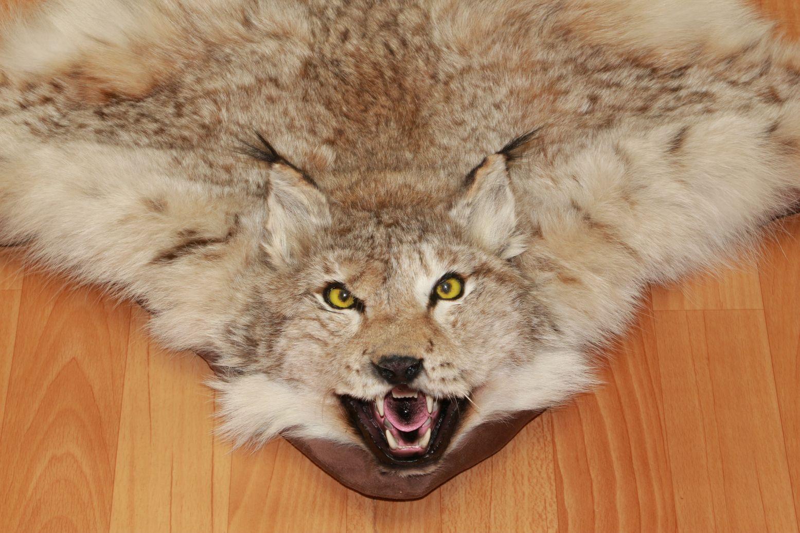 Eurasian Lynx Taxidermy Rug Carpet For Sale Fur Pelt