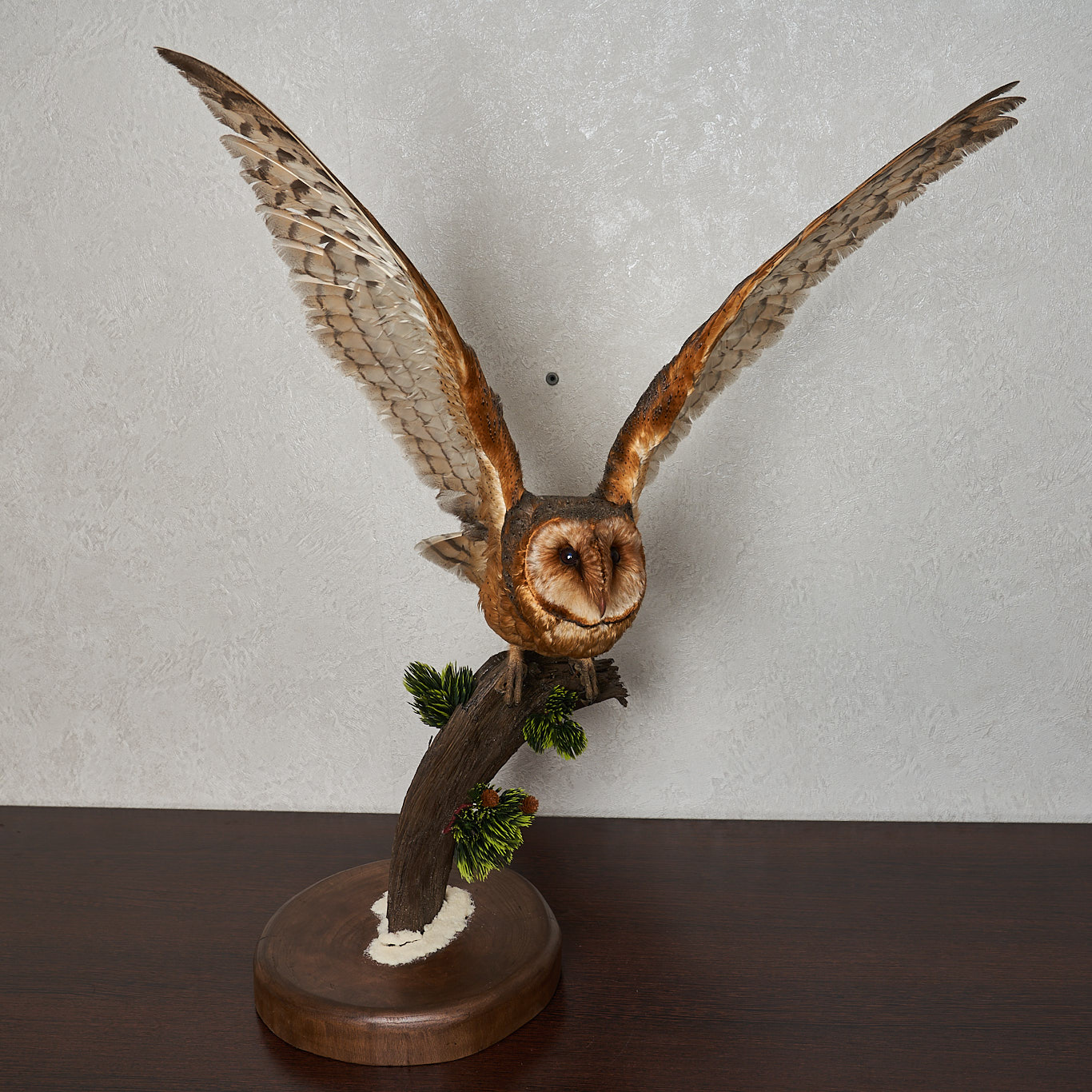 BARN OWL TAXIDERMY BIRD MOUNT - MOUNTED, STUFFED BIRDS FOR ...