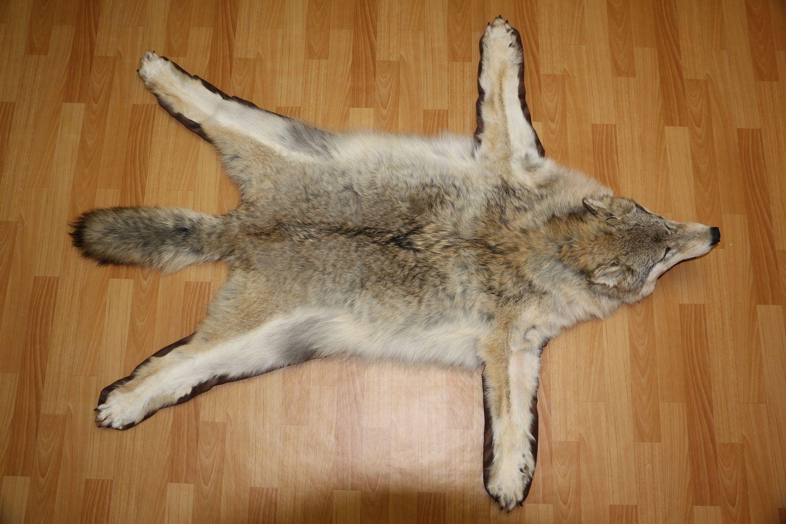 Siberian Grey Wolf Taxidermy Rug Carpet For Sale Fur