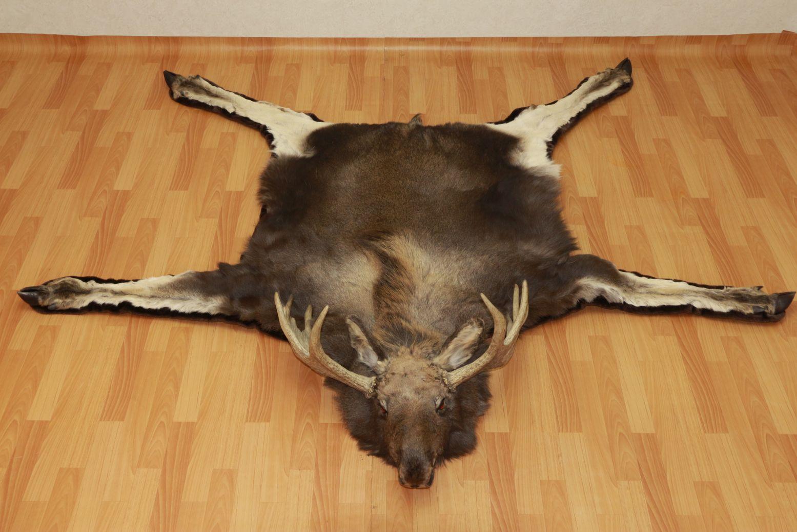 Moose Elk Taxidermy Rug Carpet For Sale Fur Pelt Hide Skin